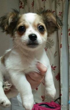 f:id:dog_life_saving:20150308115819j:image