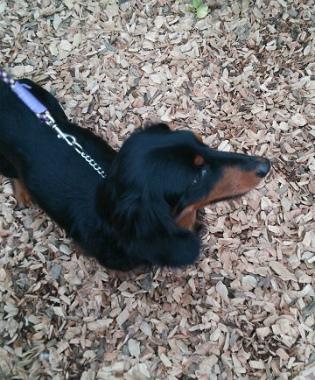 f:id:dog_life_saving:20150308120348j:image