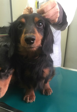 f:id:dog_life_saving:20150308120350j:image