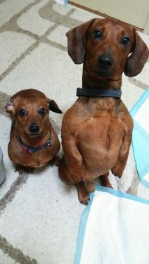 f:id:dog_life_saving:20150308120858j:image