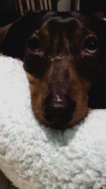 f:id:dog_life_saving:20150405202336j:image