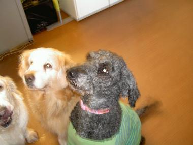 f:id:dog_life_saving:20150411203509j:image