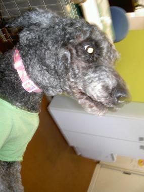 f:id:dog_life_saving:20150411203510j:image