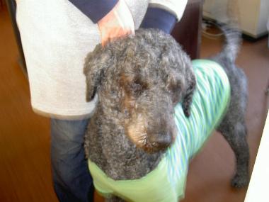 f:id:dog_life_saving:20150411203511j:image