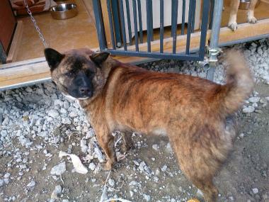 f:id:dog_life_saving:20150411220734j:image