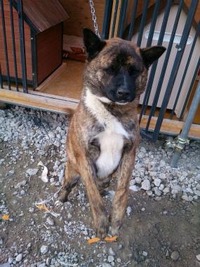 f:id:dog_life_saving:20150411220735j:image