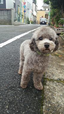f:id:dog_life_saving:20150527224424j:image