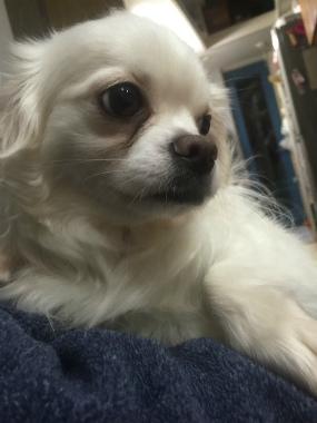 f:id:dog_life_saving:20150527225742j:image