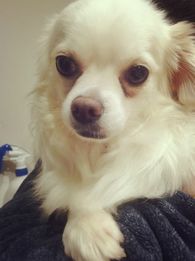 f:id:dog_life_saving:20150527225743j:image