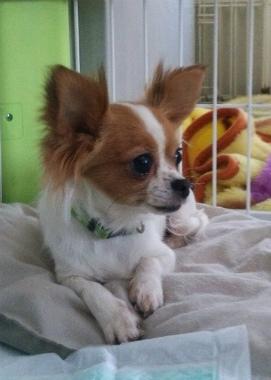 f:id:dog_life_saving:20150527231743j:image