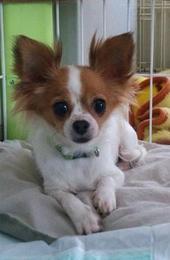 f:id:dog_life_saving:20150527231744j:image