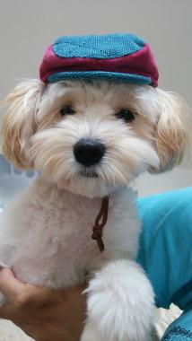 f:id:dog_life_saving:20150527233144j:image