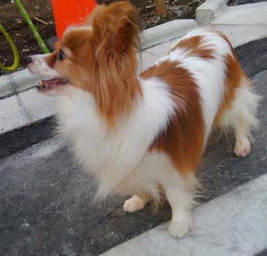 f:id:dog_life_saving:20150527234128j:image