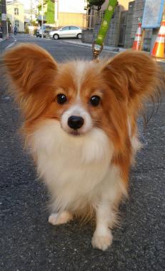 f:id:dog_life_saving:20150527234130j:image