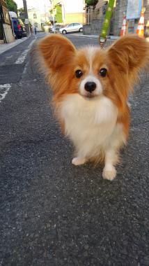 f:id:dog_life_saving:20150527234131j:image