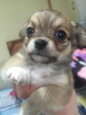 f:id:dog_life_saving:20150527235111j:image