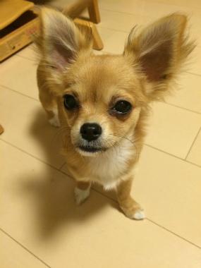 f:id:dog_life_saving:20150527235112j:image