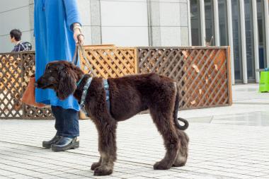 f:id:dog_life_saving:20150611071234j:image