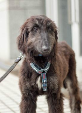 f:id:dog_life_saving:20150611071236j:image