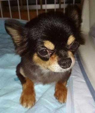 f:id:dog_life_saving:20150805105126j:image