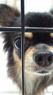 f:id:dog_life_saving:20150805105130j:image