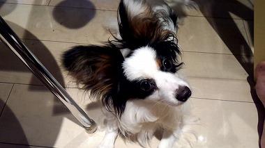 f:id:dog_life_saving:20150807142155j:image
