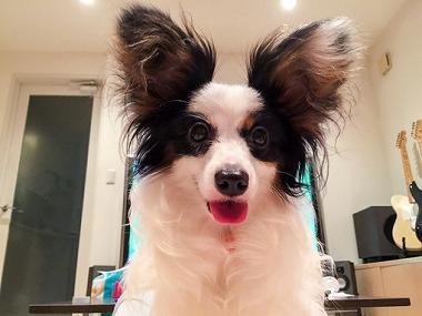 f:id:dog_life_saving:20150813143504j:image