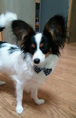 f:id:dog_life_saving:20150816131545j:image
