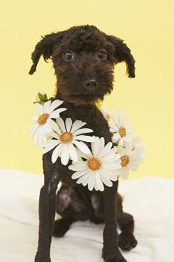 f:id:dog_life_saving:20150915150030j:image