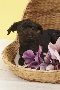 f:id:dog_life_saving:20150915150033j:image