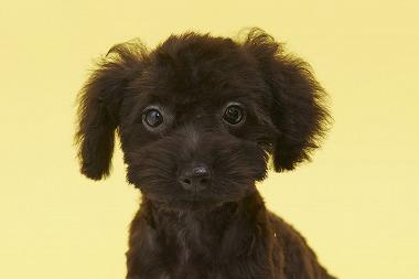 f:id:dog_life_saving:20150915150043j:image