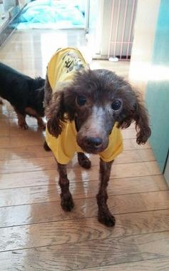 f:id:dog_life_saving:20150923140307j:image