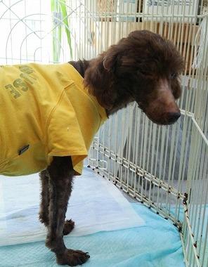 f:id:dog_life_saving:20150923140308j:image