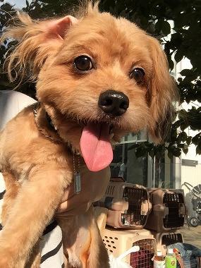 f:id:dog_life_saving:20150923140313j:image