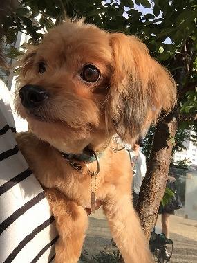 f:id:dog_life_saving:20150923140316j:image