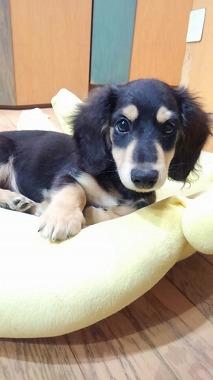 f:id:dog_life_saving:20150923140321j:image