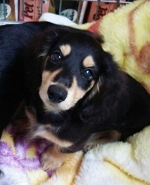 f:id:dog_life_saving:20150923140322j:image
