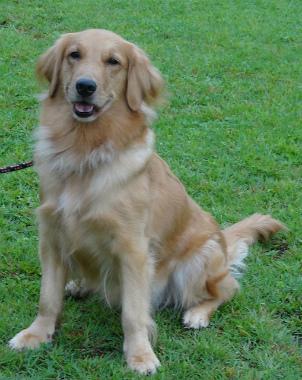 f:id:dog_life_saving:20151011080808j:image