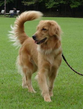 f:id:dog_life_saving:20151011080809j:image