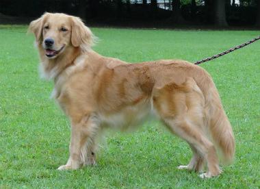 f:id:dog_life_saving:20151011080810j:image