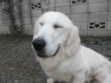 f:id:dog_life_saving:20151011084249j:image