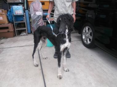 f:id:dog_life_saving:20151011133845j:image