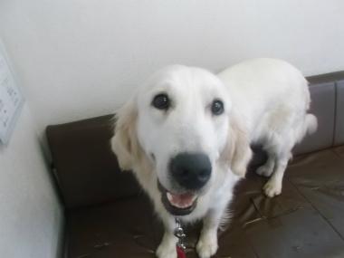 f:id:dog_life_saving:20151011142447j:image