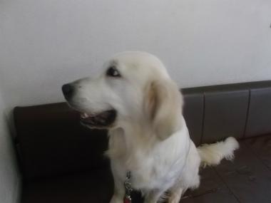 f:id:dog_life_saving:20151011142449j:image