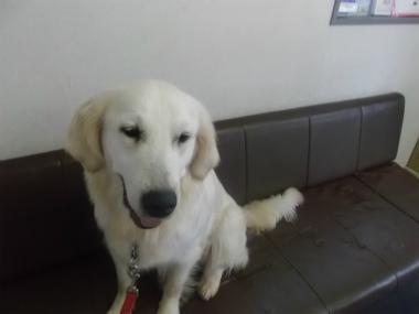 f:id:dog_life_saving:20151011142450j:image