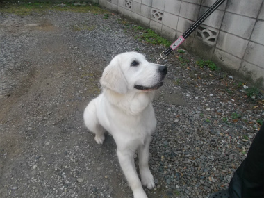 f:id:dog_life_saving:20151011143340j:image