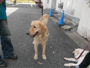f:id:dog_life_saving:20151011144320j:image