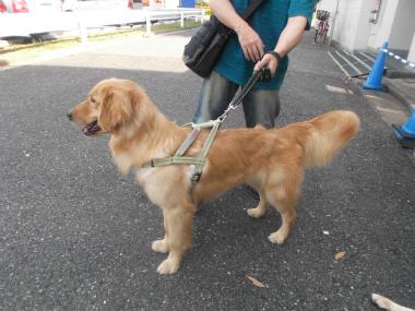 f:id:dog_life_saving:20151011144321j:image
