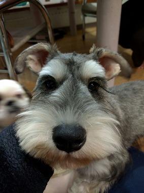 f:id:dog_life_saving:20151212192453j:image
