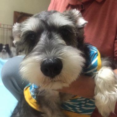f:id:dog_life_saving:20151212192454j:image